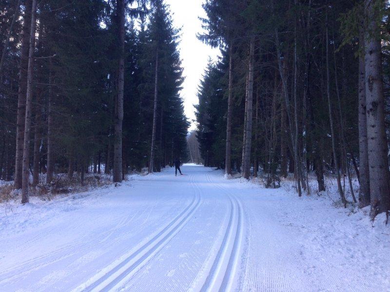chamonix-cross-country-skiing-through-the-woods